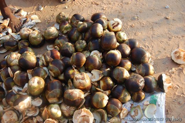 Плоды с пальмового дерева Тала на ярмарке, те самые, что вкушали Кришна с Баларамой в лесу Талаване