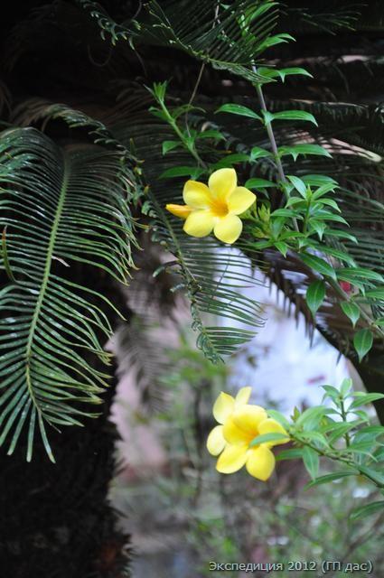цветы на дереве у дома