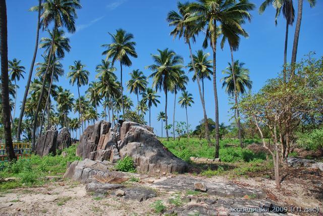 дикие кокосовые пальмы
