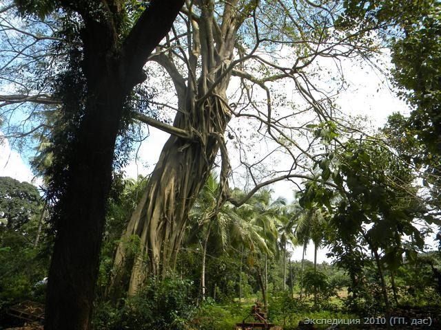 Поместье окружено полями, кокосовыми рощами и девственной тропической растительностью