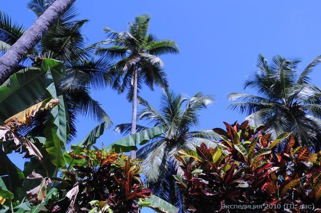 Не забывайте в небо смотреть, особенно попав в райски кущи!